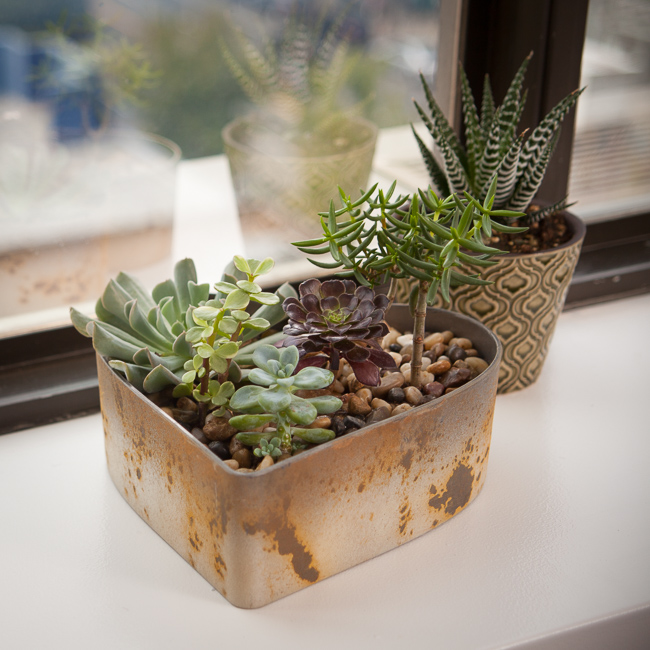 Succulent plants on a window sill
